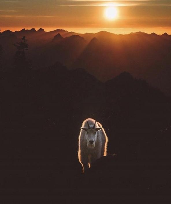 Alaskan Mountain Goat by Alaska Boat Hunts